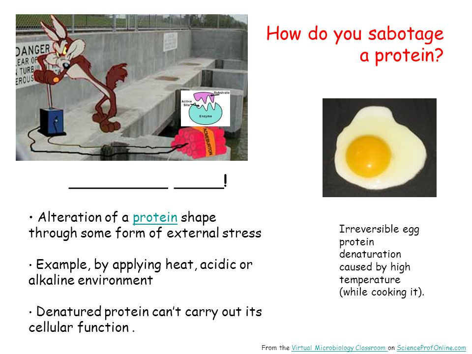 How do you sabotage a protein