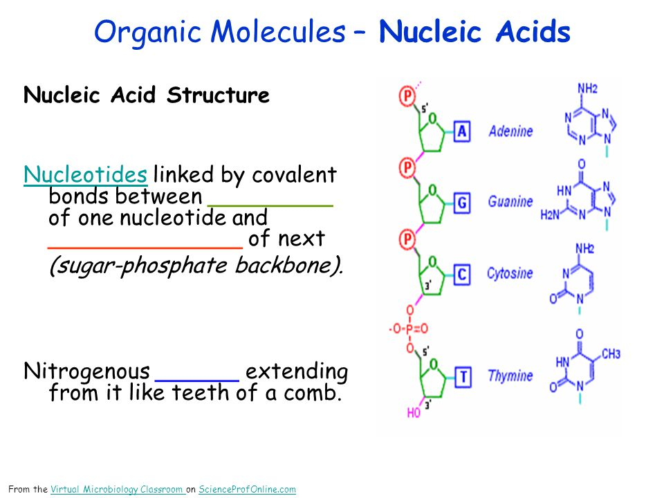 Organic Molecules – Nucleic Acids