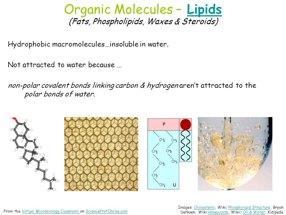 Organic Molecules – Lipids (Fats, Phospholipids, Waxes & Steroids)