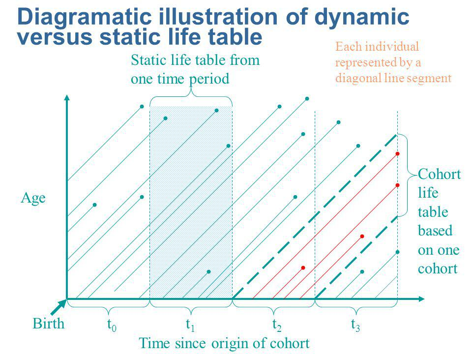 Diagramatic illustration of dynamic versus static life table