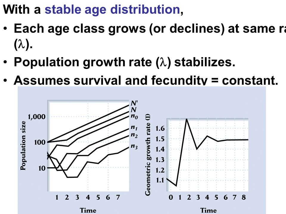 With a stable age distribution,