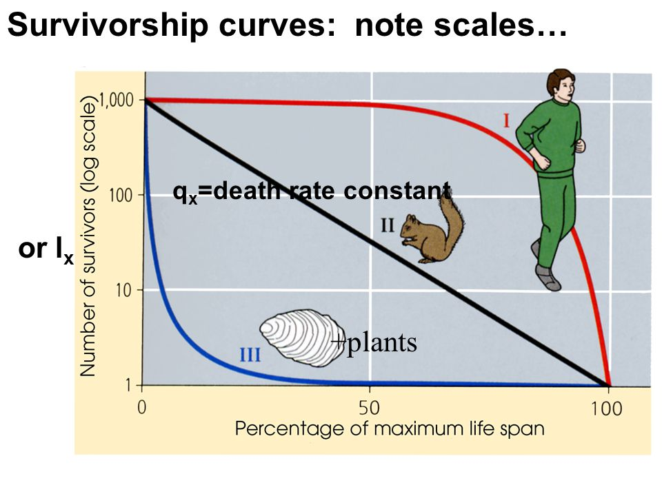 Survivorship curves: note scales…