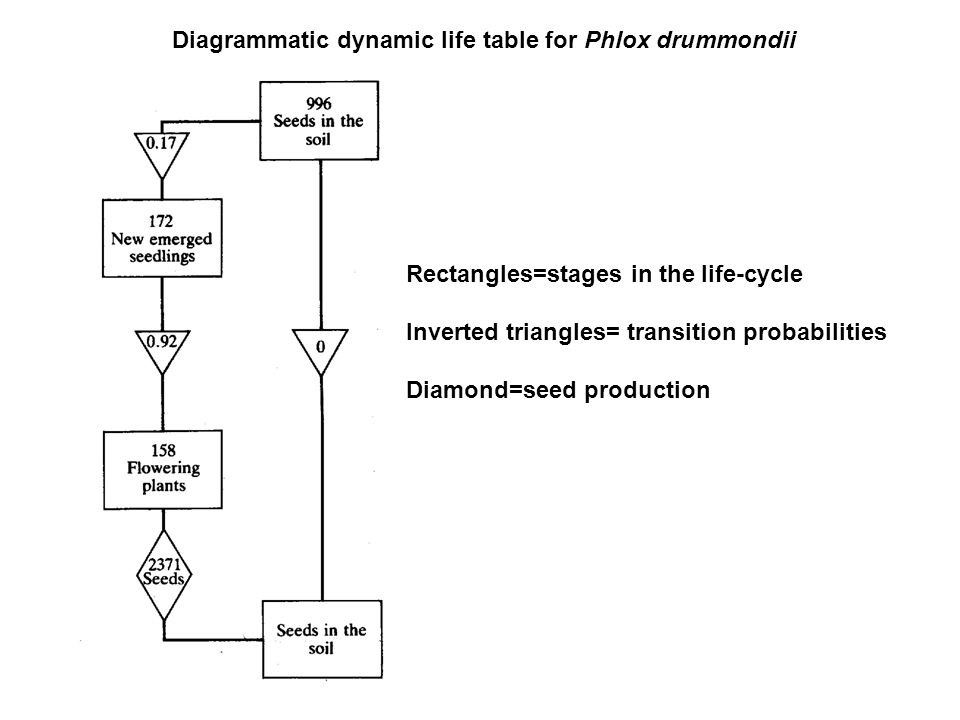 Diagrammatic dynamic life table for Phlox drummondii