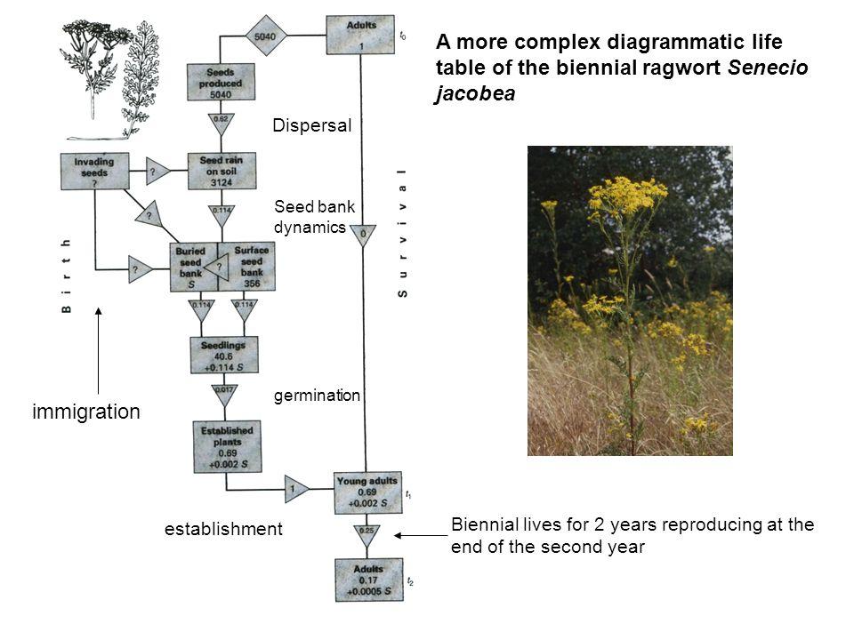 A more complex diagrammatic life table of the biennial ragwort Senecio jacobea
