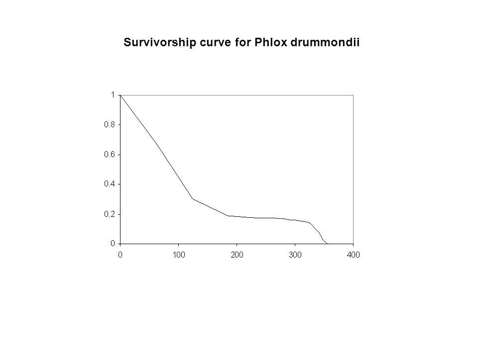 Survivorship curve for Phlox drummondii