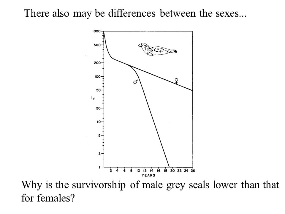 There also may be differences between the sexes...
