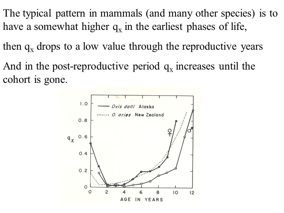 The typical pattern in mammals (and many other species) is to have a somewhat higher qx in the earliest phases of life,