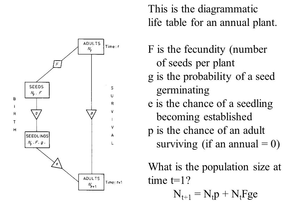 This is the diagrammatic