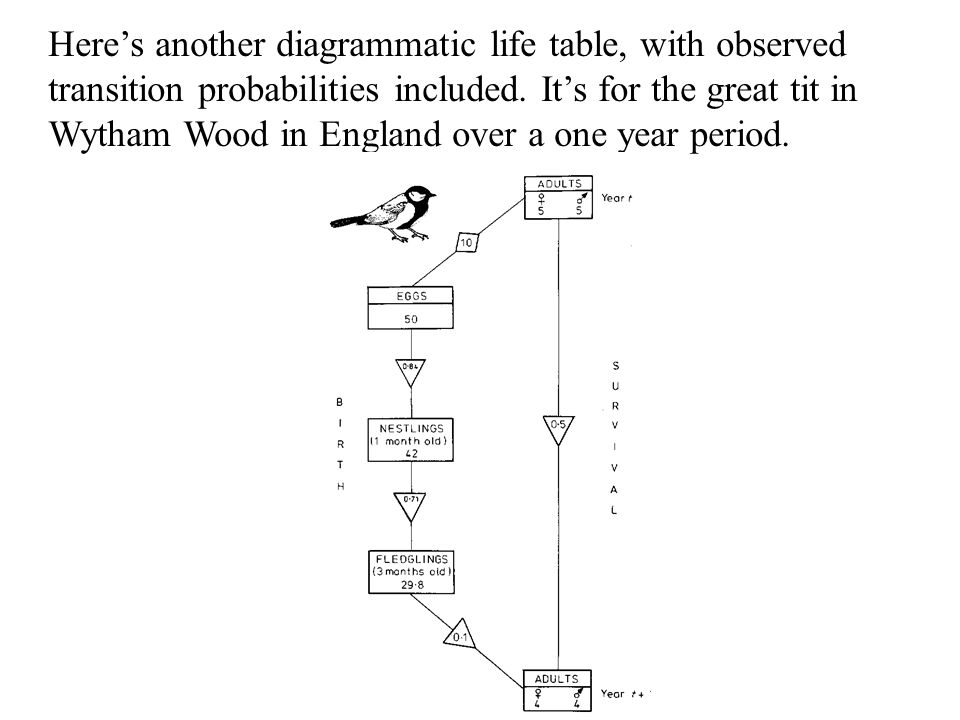 Here's another diagrammatic life table, with observed