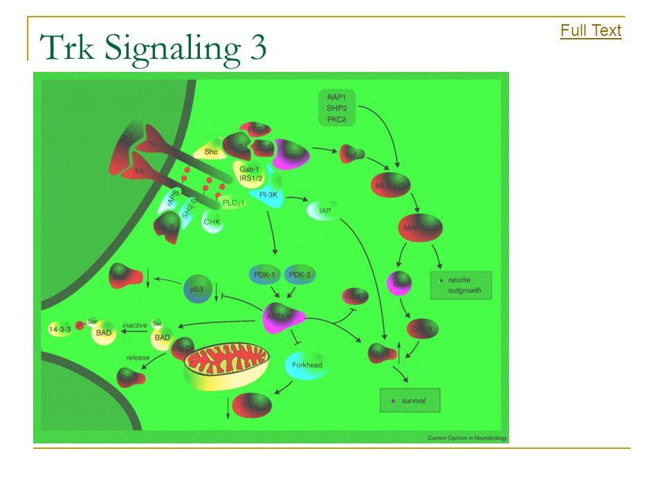 Trk Signaling 3 Full Text