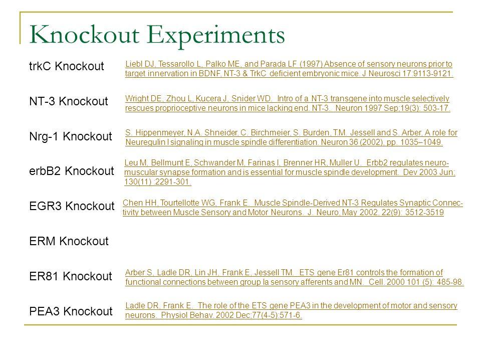 Knockout Experiments trkC Knockout NT-3 Knockout Nrg-1 Knockout