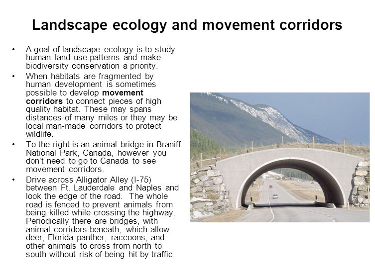 Landscape ecology and movement corridors