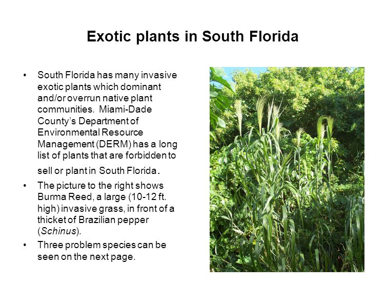 Exotic plants in South Florida