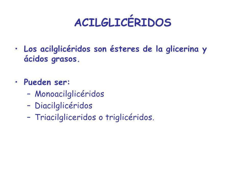 ACILGLICÉRIDOS Los acilglicéridos son ésteres de la glicerina y ácidos grasos. Pueden ser: Monoacilglicéridos.