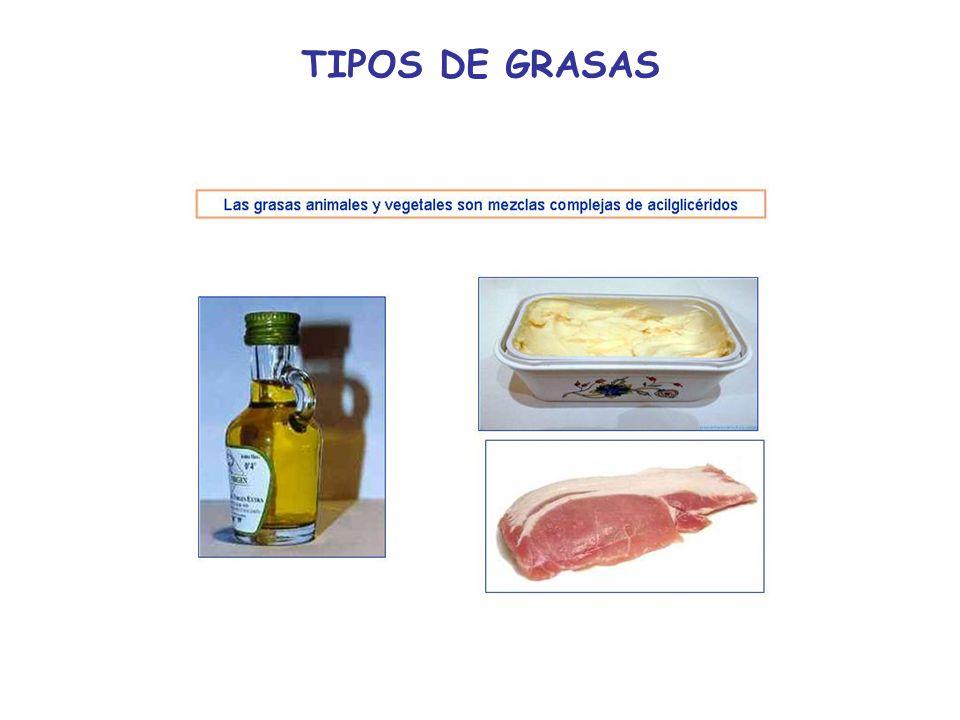 TIPOS DE GRASAS