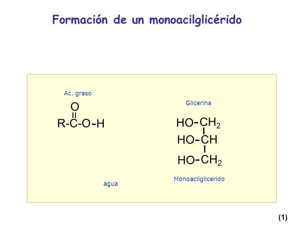 Formación de un monoacilglicérido