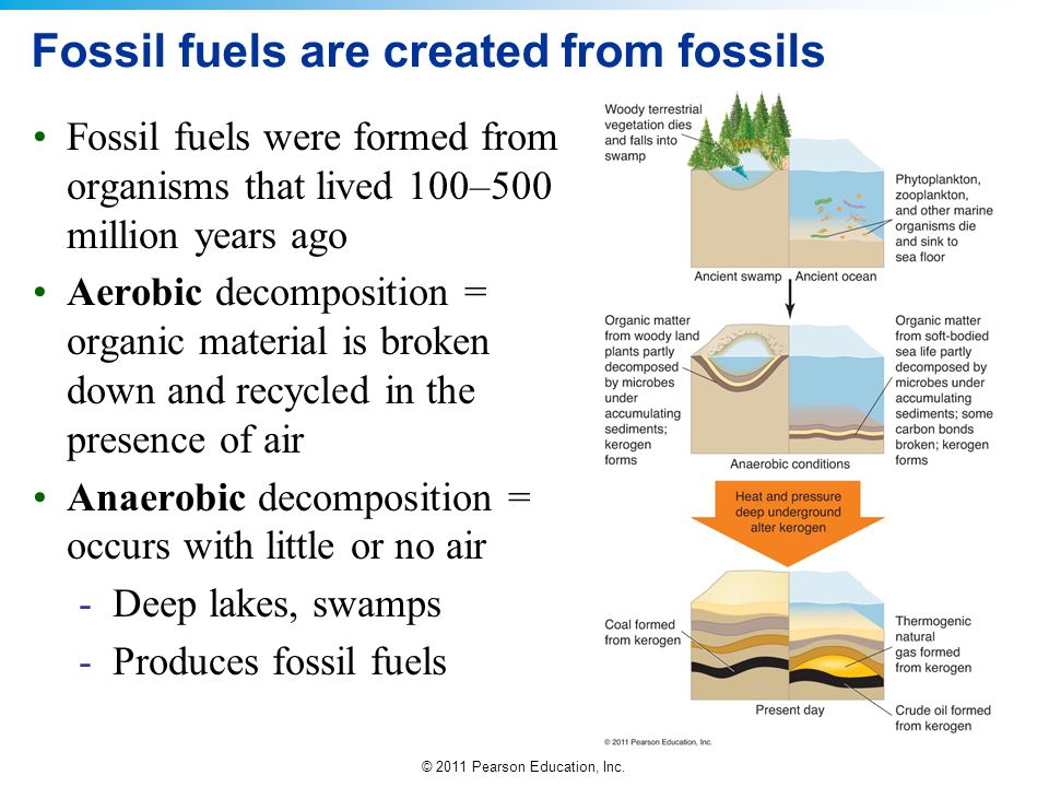 Fossil fuels are created from fossils