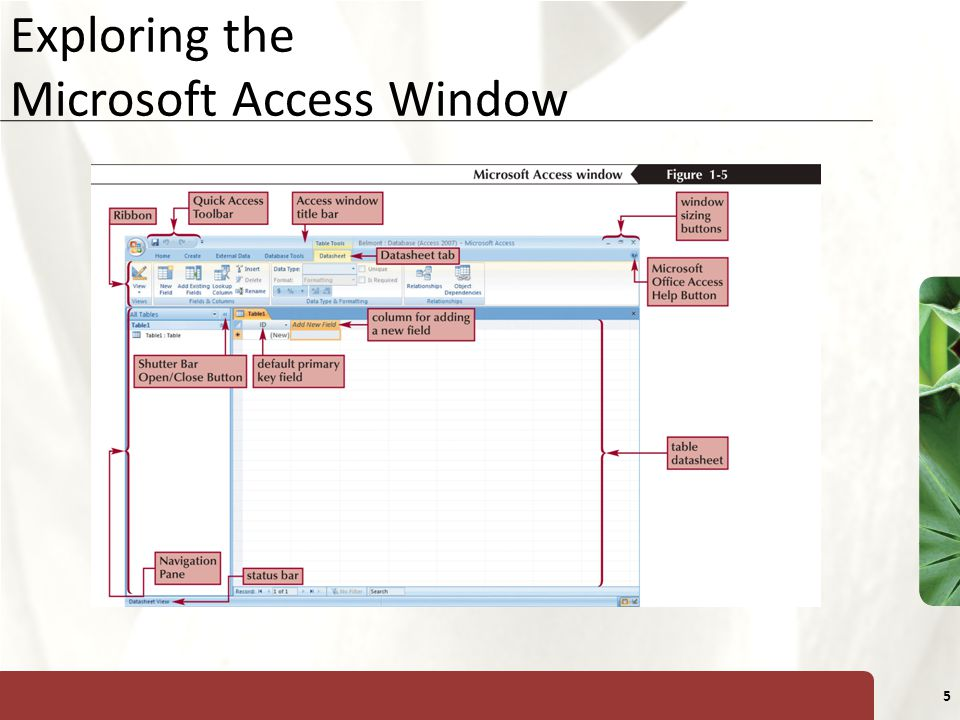 Exploring the Microsoft Access Window
