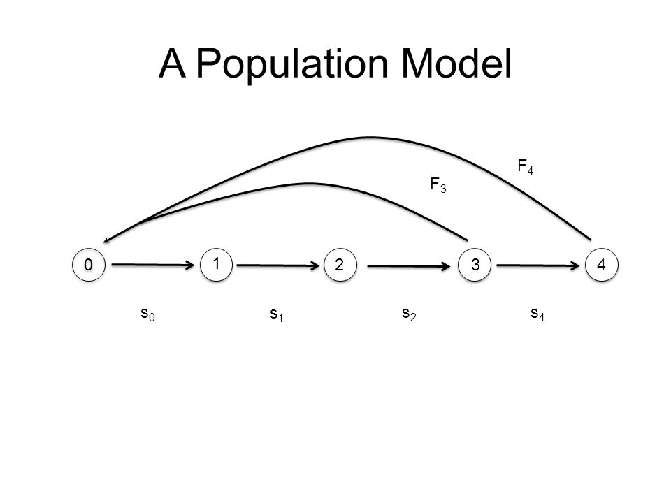 A Population Model F4 F3 1 2 3 4 s0 s1 s2 s4