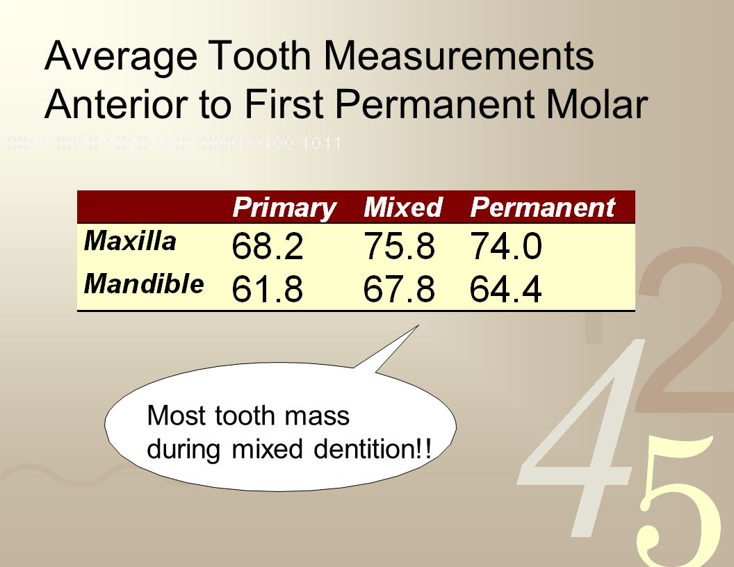 Average Tooth Measurements Anterior to First Permanent Molar
