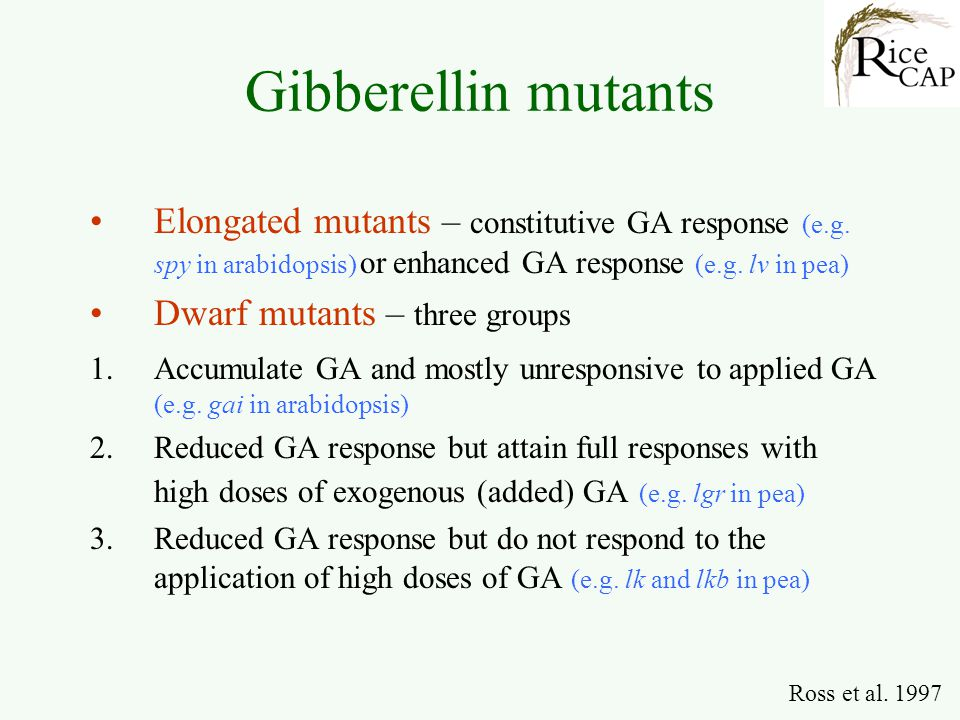 Gibberellin mutants Elongated mutants – constitutive GA response (e.g. spy in arabidopsis) or enhanced GA response (e.g. lv in pea)
