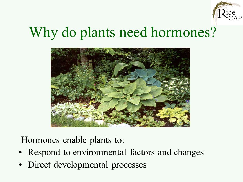 Why do plants need hormones