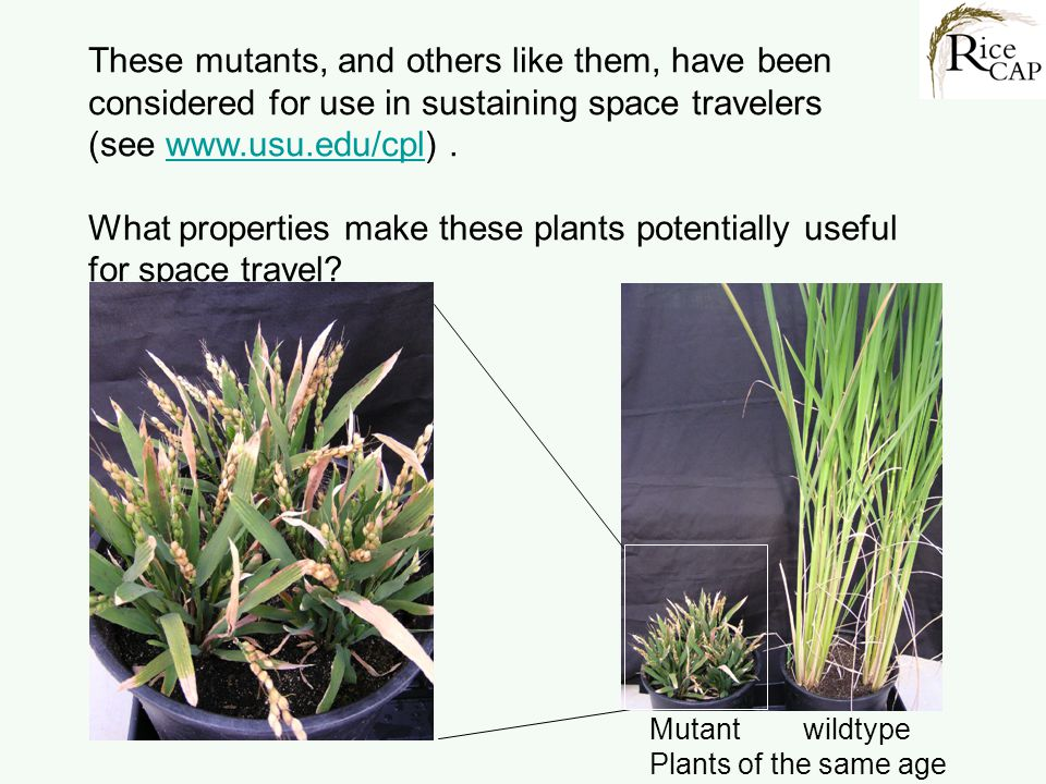 What properties make these plants potentially useful for space travel