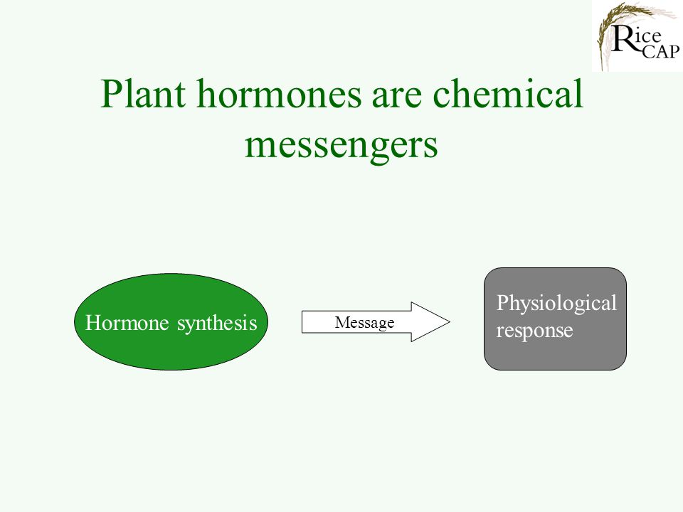 Plant hormones are chemical messengers