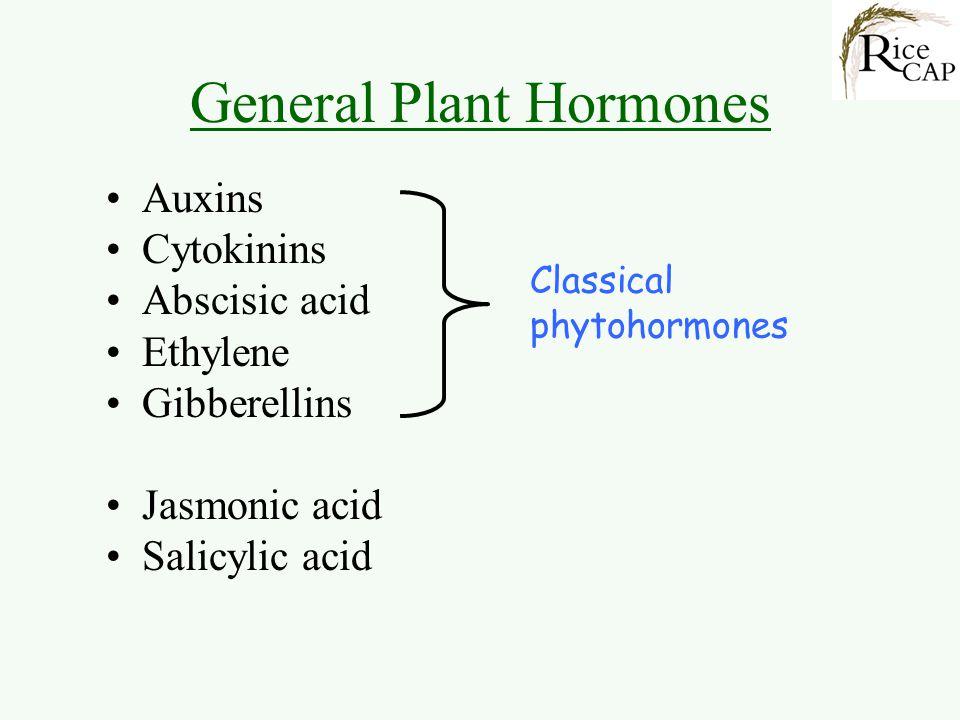 General Plant Hormones