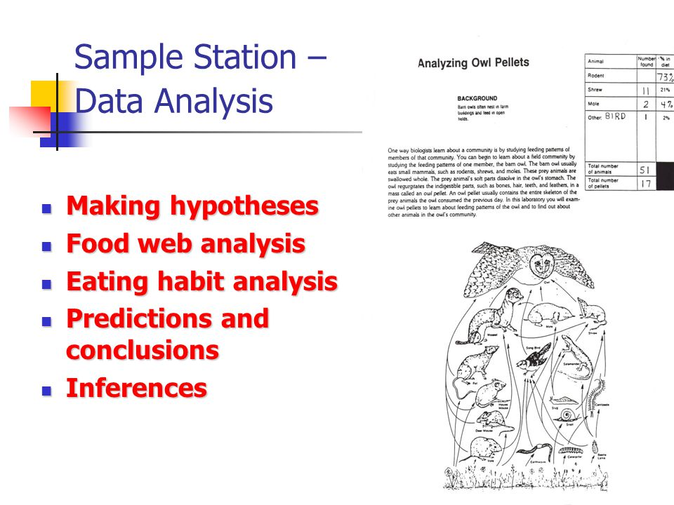 Sample Station – Data Analysis
