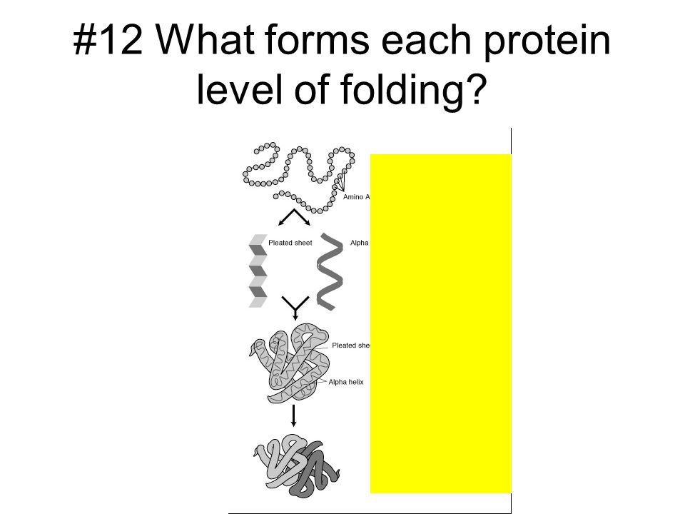 #12 What forms each protein level of folding