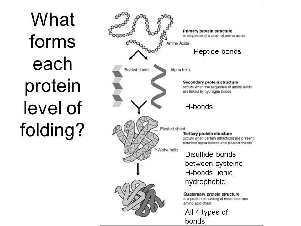 What forms each protein level of folding