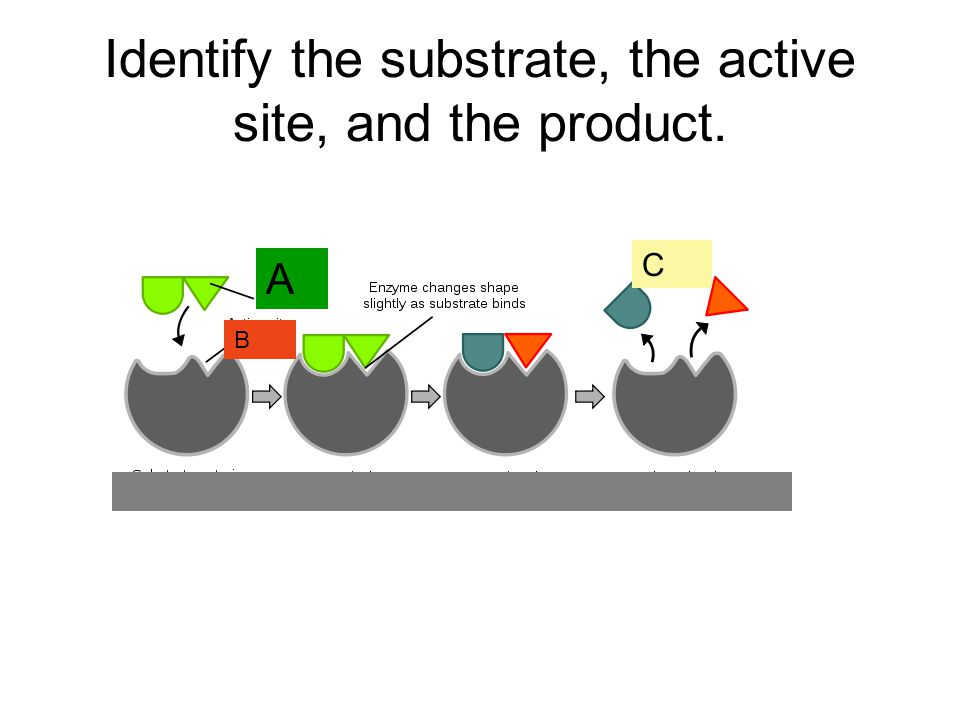 Identify the substrate, the active site, and the product.