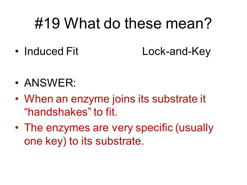 #19 What do these mean Induced Fit Lock-and-Key ANSWER: