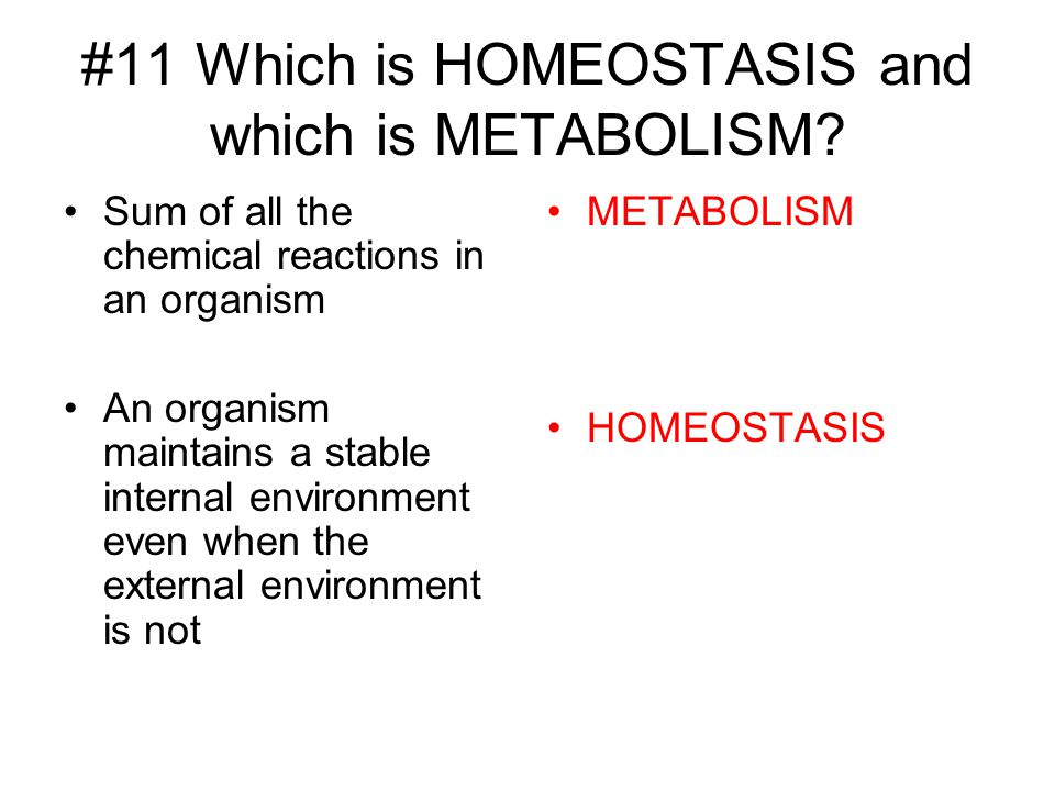 #11 Which is HOMEOSTASIS and which is METABOLISM