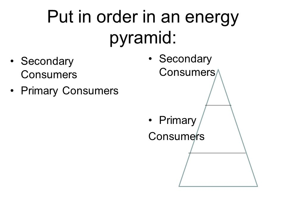 Put in order in an energy pyramid: