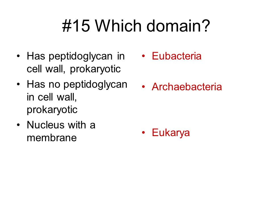 #15 Which domain Has peptidoglycan in cell wall, prokaryotic