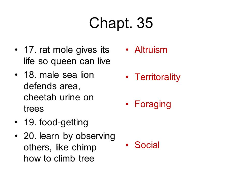 Chapt. 35 17. rat mole gives its life so queen can live