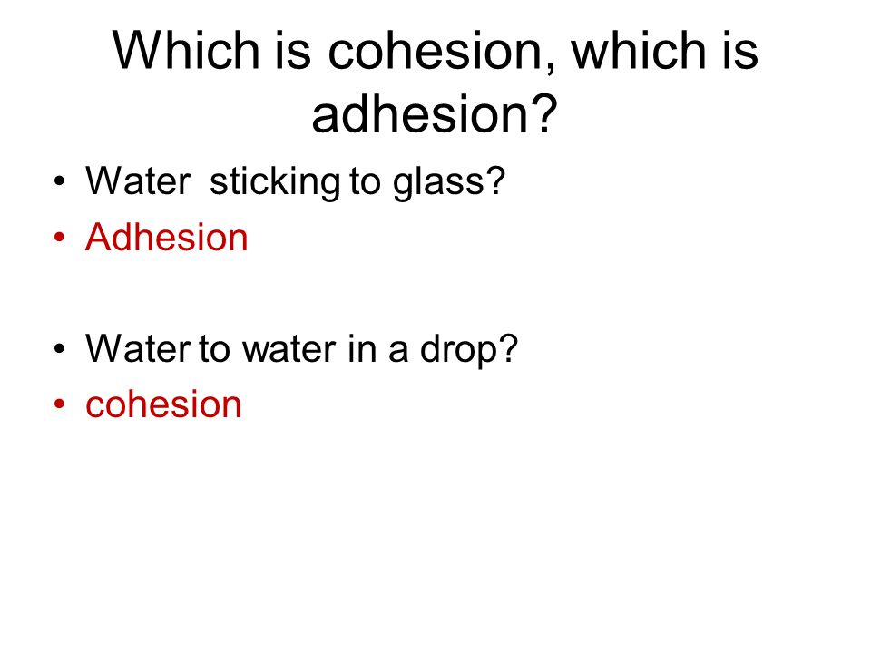 Which is cohesion, which is adhesion