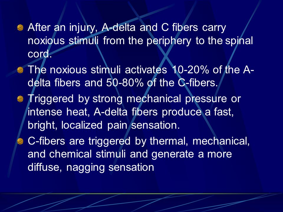 After an injury, A-delta and C fibers carry noxious stimuli from the periphery to the spinal cord.