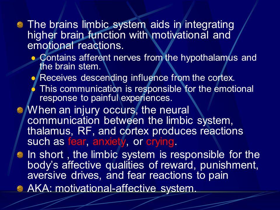 AKA: motivational-affective system.