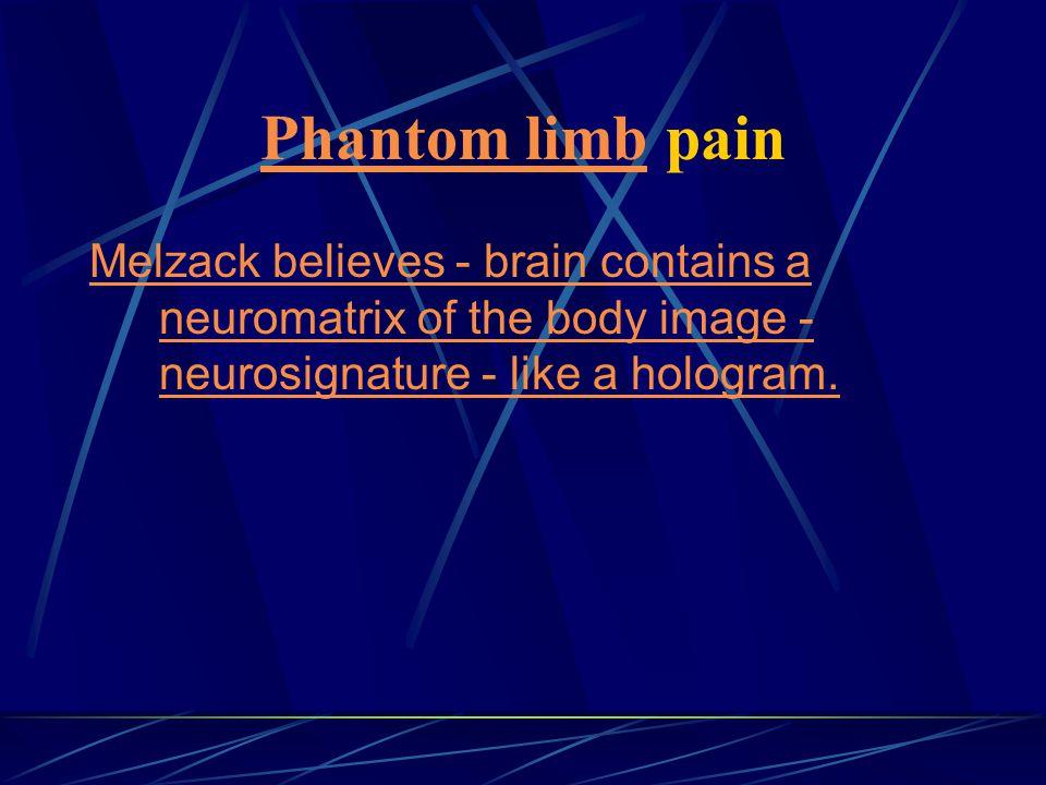 Phantom limb pain Melzack believes - brain contains a neuromatrix of the body image - neurosignature - like a hologram.