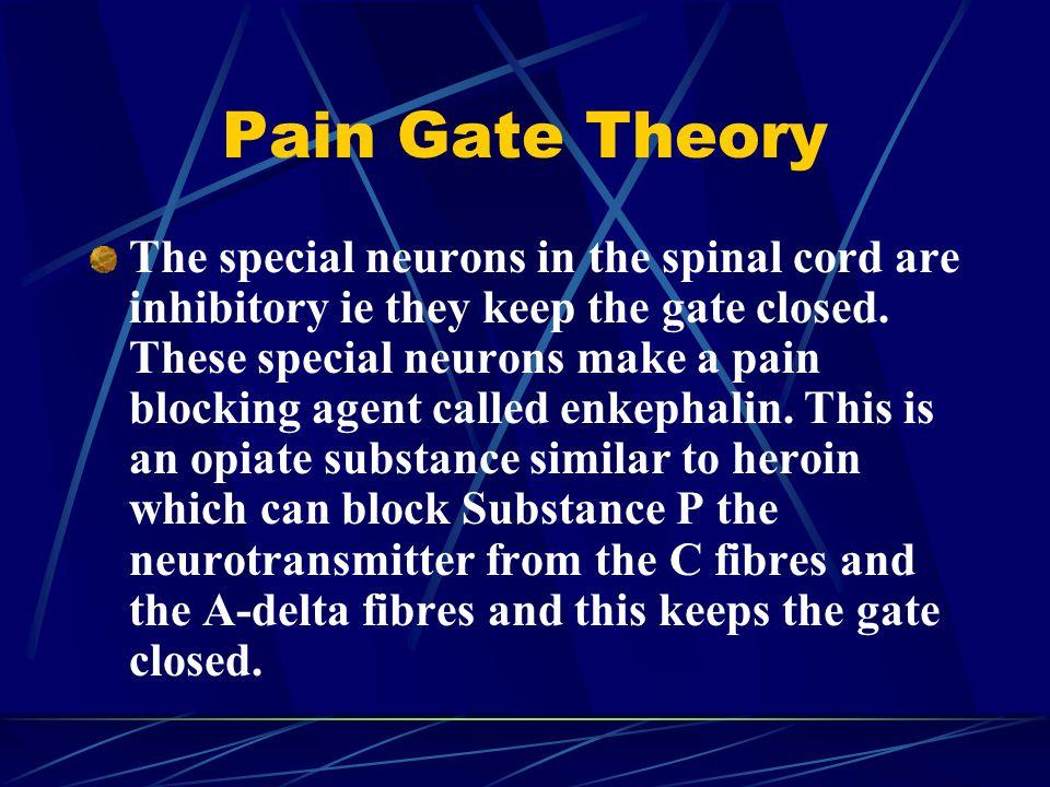 Pain Gate Theory