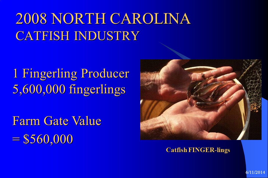 2008 NORTH CAROLINA CATFISH INDUSTRY