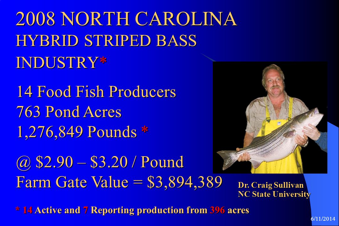 2008 NORTH CAROLINA HYBRID STRIPED BASS INDUSTRY*