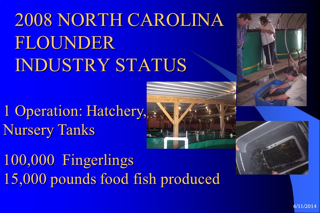 2008 NORTH CAROLINA FLOUNDER INDUSTRY STATUS