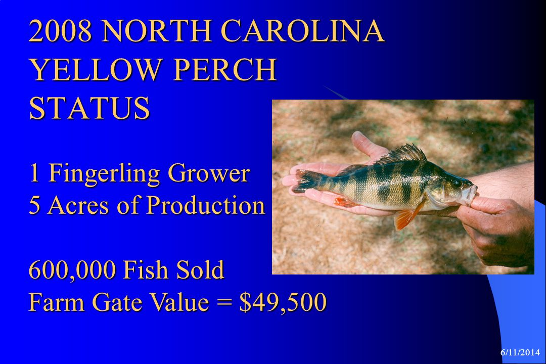 2008 NORTH CAROLINA YELLOW PERCH STATUS