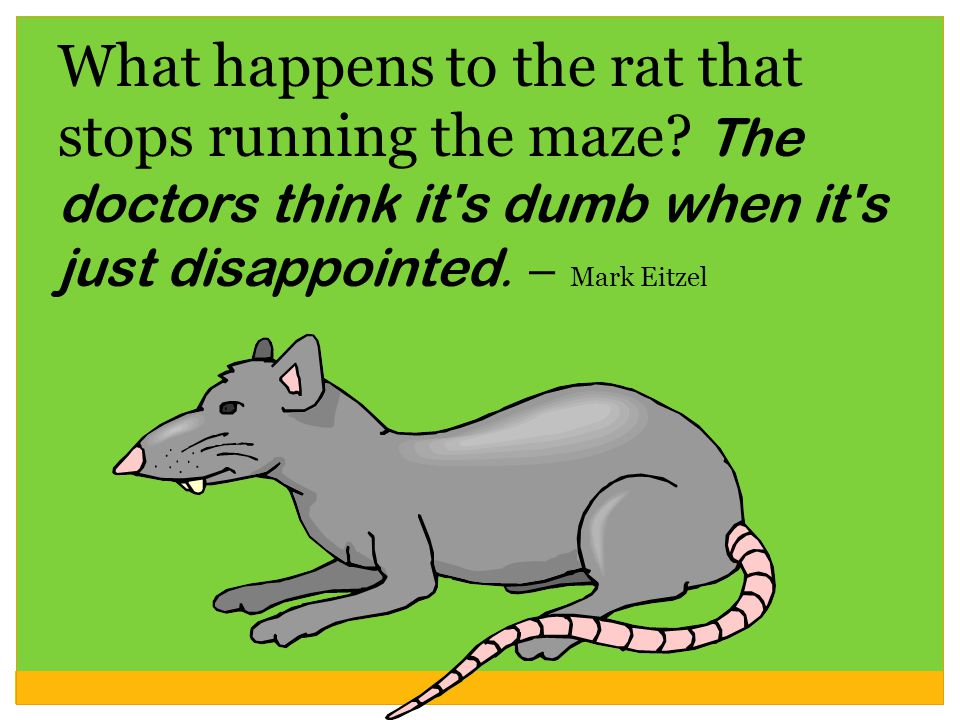 What happens to the rat that stops running the maze