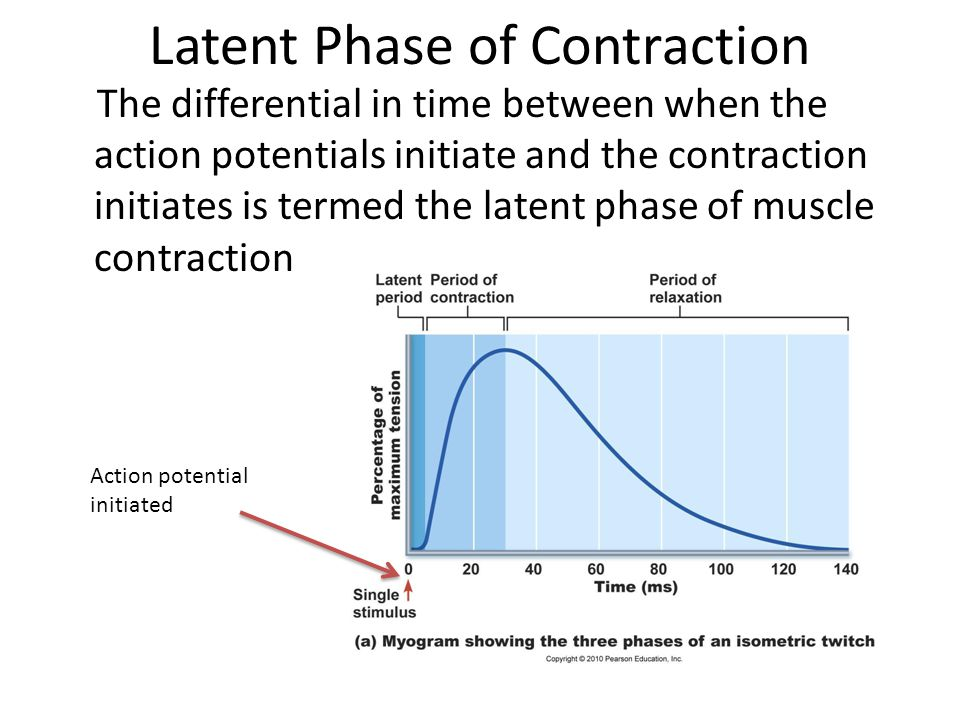 Latent Phase of Contraction