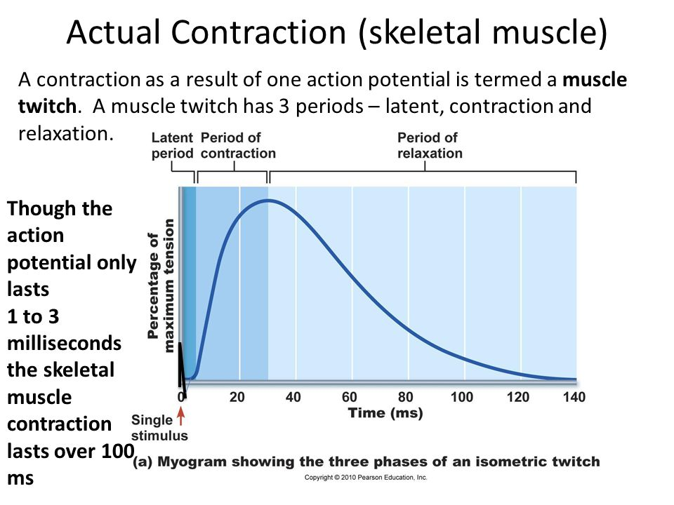 Actual Contraction (skeletal muscle)